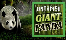 untamed giant panda goldenslott